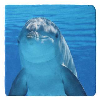 El delfín de Bottlenose mira la cámara debajo del Salvamanteles