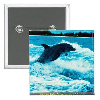 El delfín de Bottlenose (truncatus) del Tursiops, Pin Cuadrado