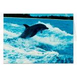 El delfín de Bottlenose (truncatus) del Tursiops,  Felicitacion