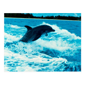 El delfín de Bottlenose (truncatus) del Tursiops,  Tarjeta Postal