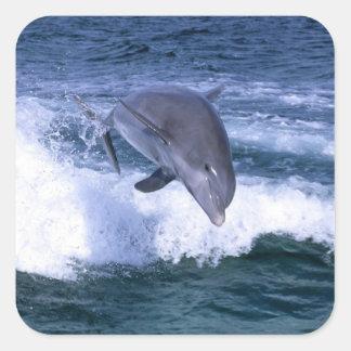 El delfín que salta, Bahama magnífico, Bahamas Pegatina Cuadrada