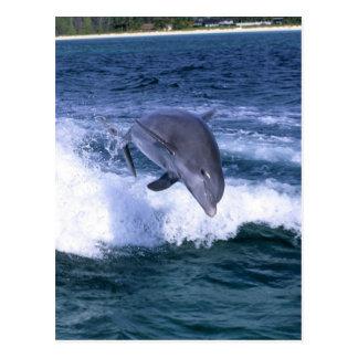 El delfín que salta, Bahama magnífico, Bahamas Postales