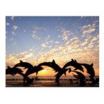 El delfín que salta del agua en la puesta del sol tarjetas postales