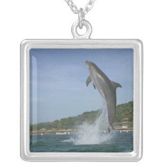 El delfín que salta, Roatan, islas de la bahía, Colgante Cuadrado