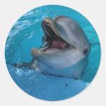 El delfín sonríe pegatina