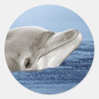 El delfín sonriente etiquetas redondas