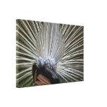 El Derierre del pavo real - exhibición de la pluma Impresiones En Lona
