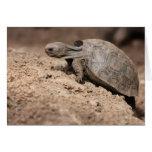 El desafío de la tortuga felicitación