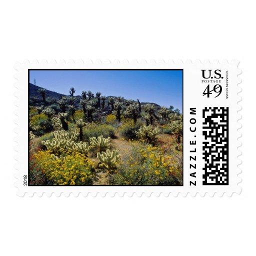 el desierto amarillo florece, el estado P del Sello