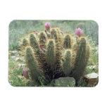 El desierto florece imán decorativo del refrigerad