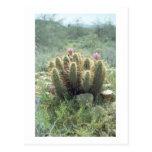 El desierto florece postal de la foto de Arizona