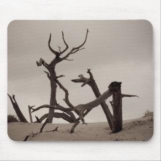 El desierto - isla del Cumberland, Georgia Tapetes De Ratón