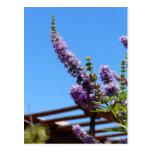 El desierto púrpura florece la postal