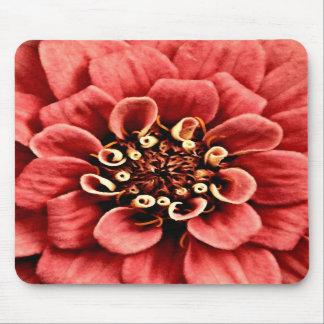 el detalle rosado del zinnia es alegre pero no dem alfombrilla de ratones
