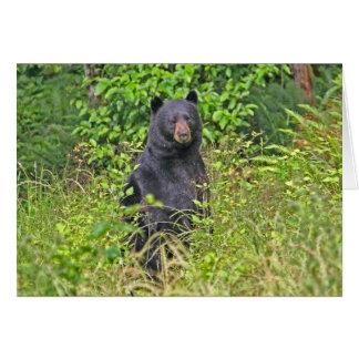 El día de padre del oso de la papá tarjeta de felicitación