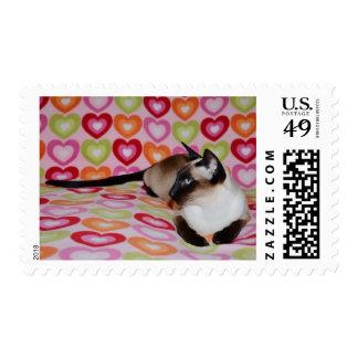 El día de San Valentín 1r del amor del gato siamés Sello