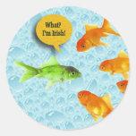 El día de St Patrick, humor del Goldfish Etiquetas Redondas
