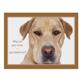 El día Labrador divertido del inocente Tarjeta Postal