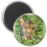 El Día-Leopardo de St Patrick Imanes Para Frigoríficos