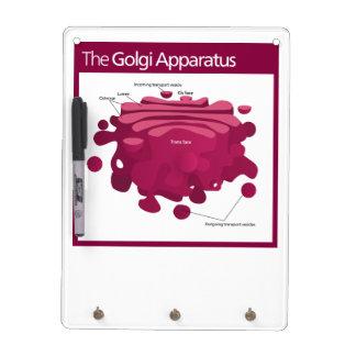 El diagrama del complejo de Golgi del aparato de G Pizarras