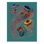 El disco Medusae de Ernst Haeckel Postal