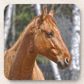 El diseño animal equino de los Caballo-amantes Posavasos