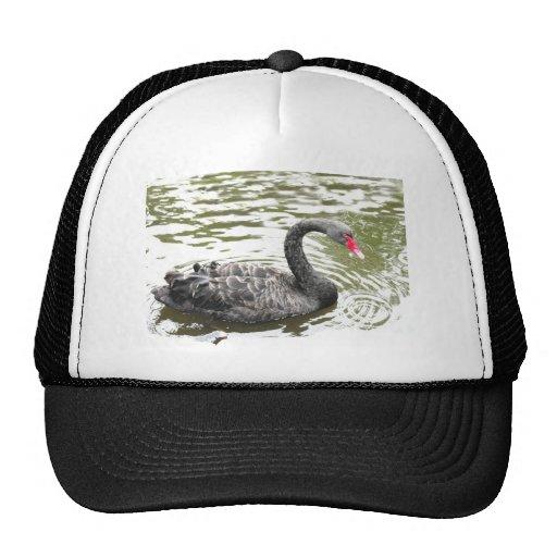 El diseño del cisne negro, pájaro diseña, las tarj gorras