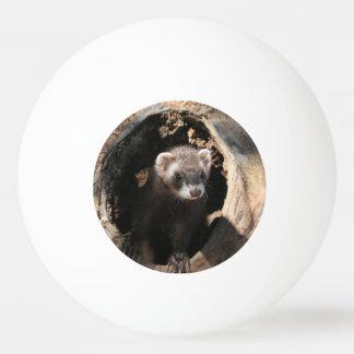 El doble de la cara del hurón echó a un lado pelota de ping pong