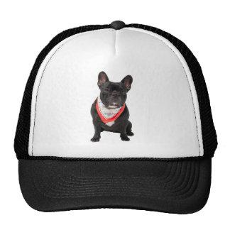 El dogo francés, persigue la foto hermosa linda, r gorras