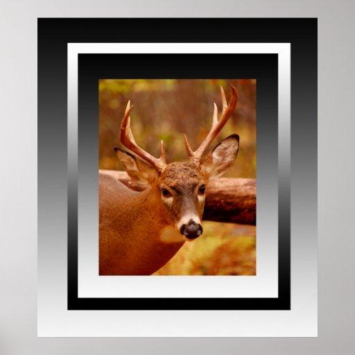 El dólar pensativo del ciervo mula poster