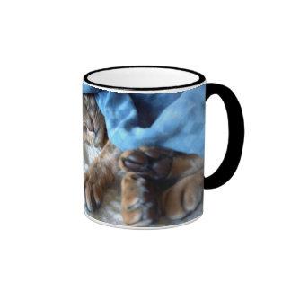 El dormir abisinio del gato taza