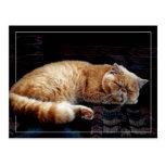 El dormir anaranjado del gato persa