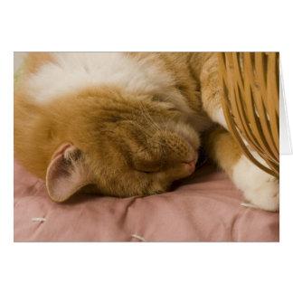 El dormir anaranjado del tabby tarjeta de felicitación