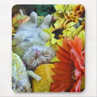 El dormir animal del bebé, gatito de la naturaleza tapetes de raton