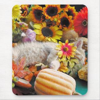 El dormir animal lindo, gatito de la naturaleza, f alfombrilla de ratones