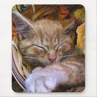 El dormir animal lindo, gatito de la naturaleza, f alfombrillas de ratón