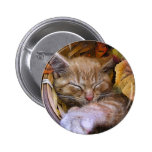 El dormir animal lindo, gatito de la naturaleza, h pin