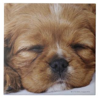 El dormir arrogante del perrito del perro de aguas azulejo cuadrado grande