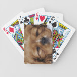 El dormir arrogante del perrito del perro de aguas baraja de cartas