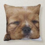 El dormir arrogante del perrito del perro de aguas almohadas