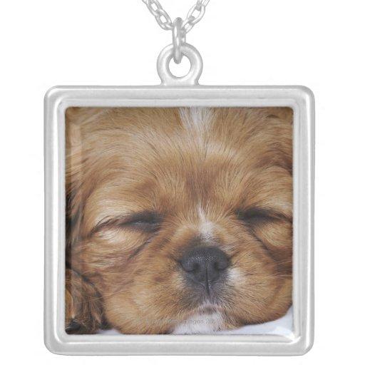 El dormir arrogante del perrito del perro de aguas colgante cuadrado