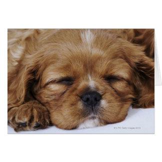 El dormir arrogante del perrito del perro de aguas tarjeta de felicitación