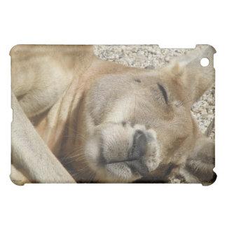 El dormir Australia del canguro