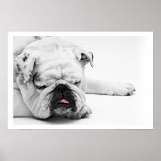 El dormir blanco del dogo posters