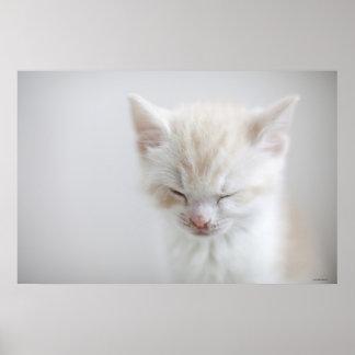 El dormir blanco del gatito póster
