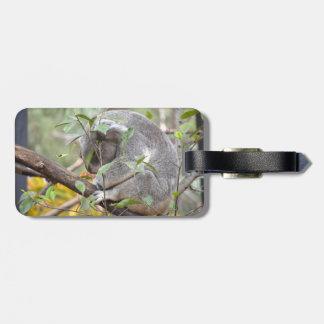 el dormir c de la cabeza de la koala abajo etiquetas para maletas
