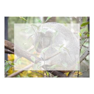el dormir c de la cabeza de la koala abajo comunicado personalizado