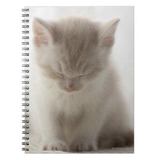 El dormir cansado del gatito libros de apuntes