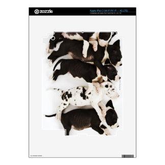 El dormir de cinco del Harlequin perritos de great Pegatina Skin Para iPad 3