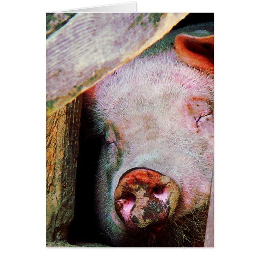 El dormir del cerdo tarjeta de felicitación